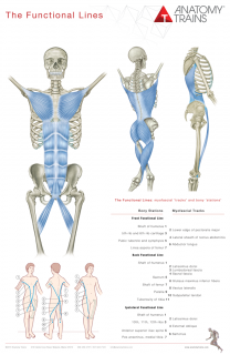 ANATOMY TRAINS POSTERS